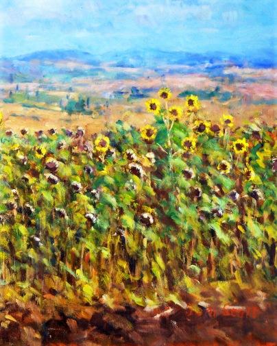 Harvest time, Umbria